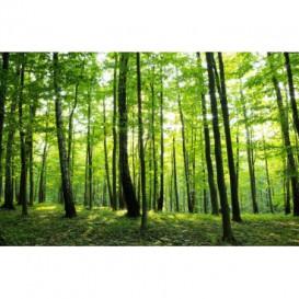 Fototapeta na stenu - FT0150 - Zelené stromy