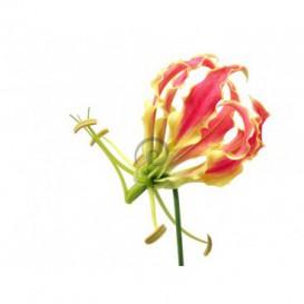 Fototapeta na zeď - FT0111 - Květ