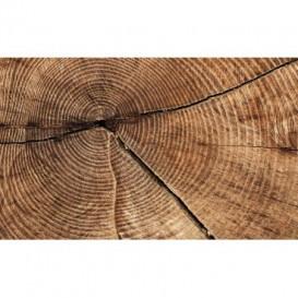 Fototapeta na stenu - FT3669 - Drevená letokruhy