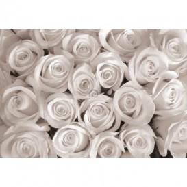 Fototapeta na stenu - FT4635 - Ruže - sivé