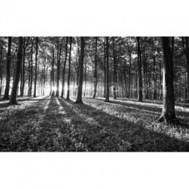 Fototapeta na stenu - FT4653 - Les - čiernobiely