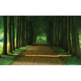 Fototapeta na stenu - FT2524 - Lesný chodník