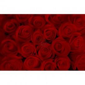 Fototapeta na stenu - FT0119 - Červené ruže