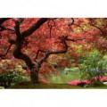 Fototapeta na stenu - FT0149 - Červený strom
