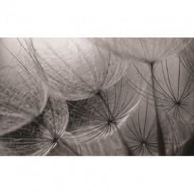 Fototapeta na stenu - FT0104 - Čiernobiela púpava
