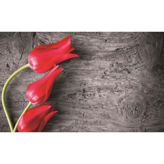 Fototapeta na stenu - FT0136 - Tulipány