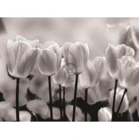 Fototapeta na stenu - FT0137 - Čiernobiele tulipány