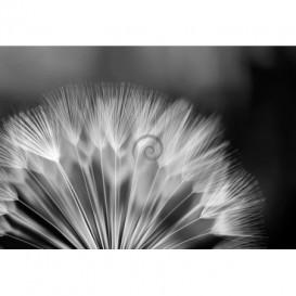 Fototapeta na stenu - FT0103 - Čiernobiela púpava