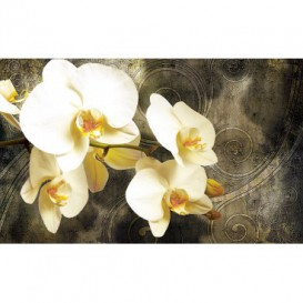 Fototapeta na stenu - FT3227 - Orchidea