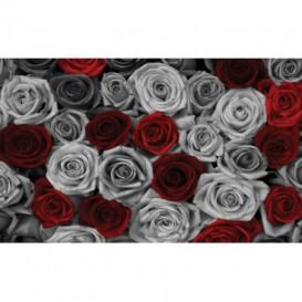 Fototapeta na stenu - FT4885 - Ruže