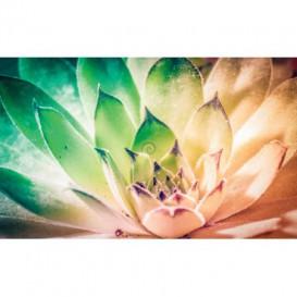 Fototapeta na stenu - FT4890 - Farebný kvet
