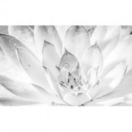 Fototapeta na stenu - FT4891 - Biely kvet