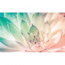 Fototapeta na stenu - FT4892 - Dúhový kvet