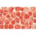 Fototapeta na stenu - FT5049 - Ruže