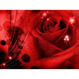 Fototapeta na stenu - FT0120 - Červená ruža