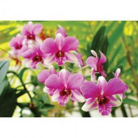Fototapeta na stenu - FT5124 - Ružová orchidea