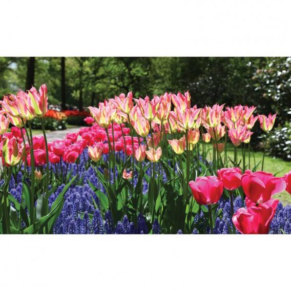 Fototapeta na stenu - FT5125 - Farebné tulipány