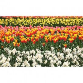 Fototapeta na stenu - FT5126 - Farebné tulipány