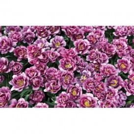 Fototapeta na stenu - FT5127 - Fialové kvety