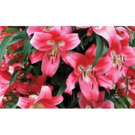 Fototapeta na stenu - FT5128 - Ružové kvety