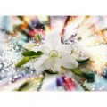 Fototapeta na stenu - FT5180 - Biely kvet