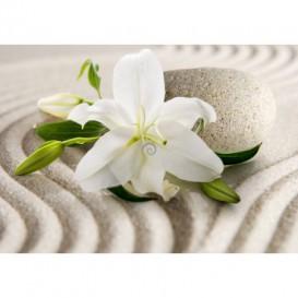 Fototapeta na stenu - FT5210 - Biely kvet