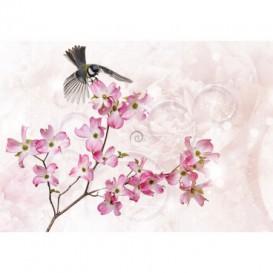 Fototapeta na stenu - FT5232 - Ružové kvety