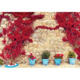 Fototapeta na stenu - FT5263 - Kamenná stena - ruže