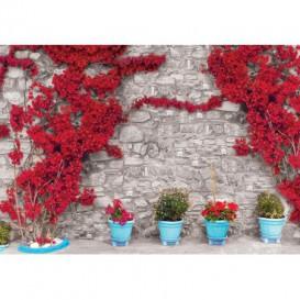 Fototapeta na stenu - FT5264 - Kamenná stena - ruže