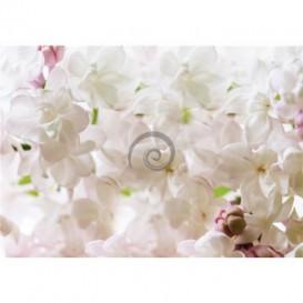 Fototapeta na stenu - FT5282 - Biela orchidea
