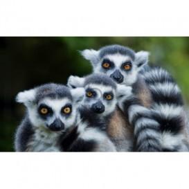 Fototapeta na stenu - FT5294 - Lemure