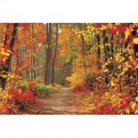 Fototapeta na stenu - FT0038 - Les v jeseni