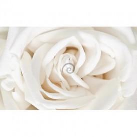 Fototapeta na stenu - FT0125 - Biela ruža