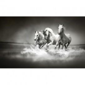 Fototapeta na stenu - FT0218 - Čiernobiele kone