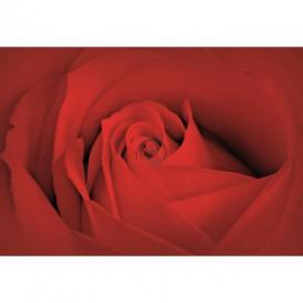 Fototapeta na stenu - FT0121 - Červená ruža