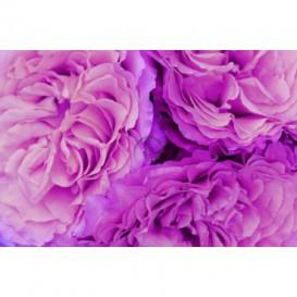 Fototapeta na stenu - FT0130 - Fialové kvety