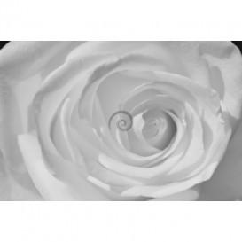 Fototapeta na stenu - FT0126 - Biela ruža