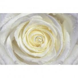 Fototapeta na stenu - FT0127 - Biela ruža