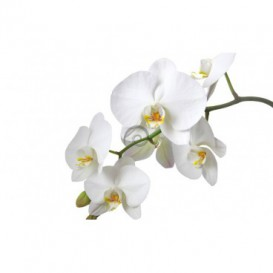 Fototapeta na stenu - FT0220 - Biely kvet