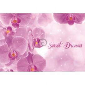 Fototapeta na stenu - FT0245 - Ružové kvety