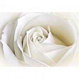 Fototapeta na stenu - FT0124 - Biela ruža