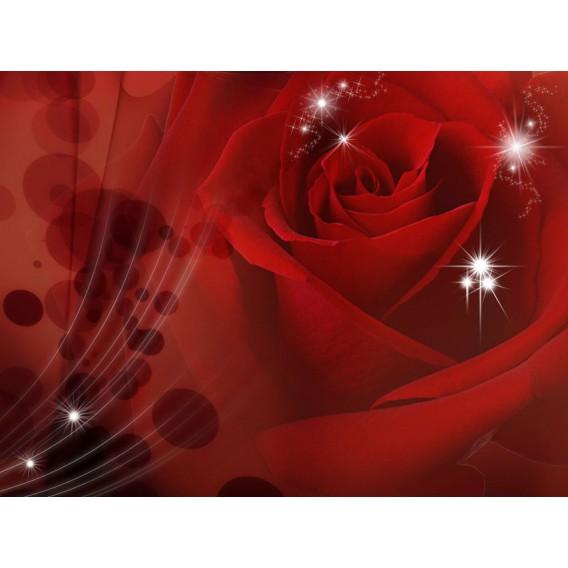 Fototapeta na stenu - FT0118 - Červená ruža