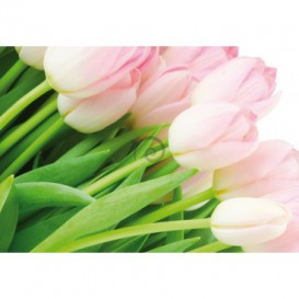Fototapeta na stenu - FT0133 - Tulipány
