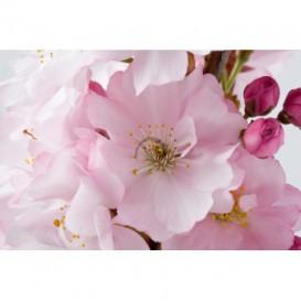 Fototapeta na stenu - FT0131 - Ružové kvety