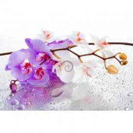 Fototapeta na stenu - FT0251 - Ružový kvet