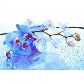 Fototapeta na stenu - FT0252 - Modrý kvet