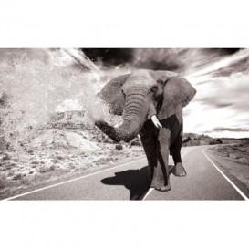 Fototapeta na stenu - FT5443 - Slon na ceste - čierno biely