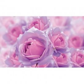 Fototapeta na stenu - FT5465 - Ružové ruže