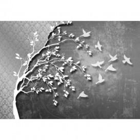 Fototapeta na stenu - FT5494 - Silueta stromu