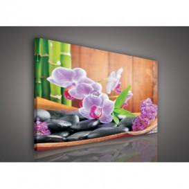 Obraz na plátne obdĺžnik - OB0094 - Ružové kvety a kamienky